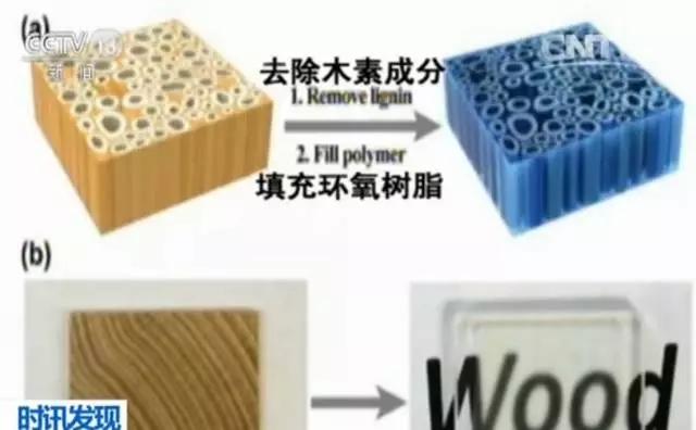 华人科学家造出透明木头